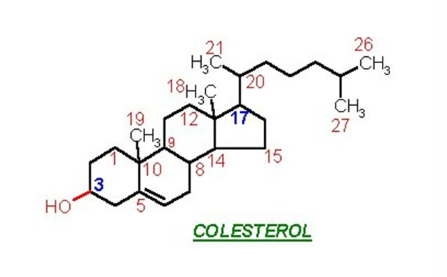 La farsa del colesterol alto vistoenlaweb org for Que significa molecula
